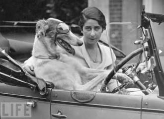 Przewóz zwierząt w samochodzie